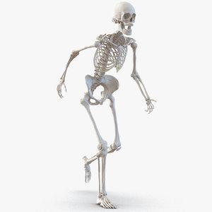 3d max human female skeleton rigged