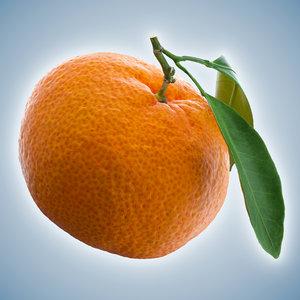 3D model mandarin polly