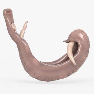 schistosoma model