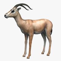 gazelle grants 3d model