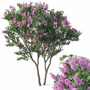 lilac tree syringa 3D