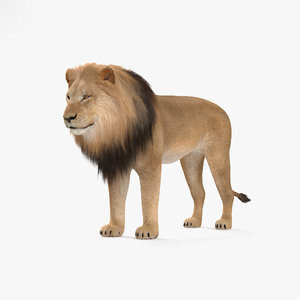 lion mammal animal 3D model