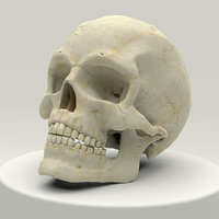 anatomically human skull 3D model