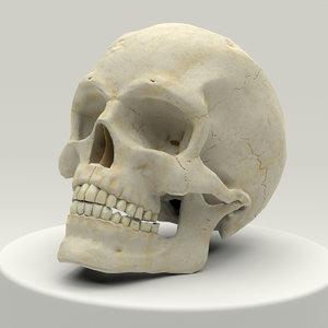 anatomically human skull 3D model