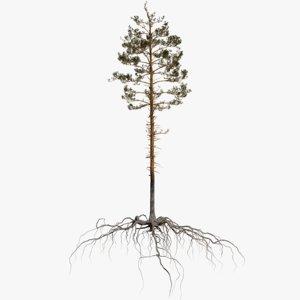 3D pine tree 3