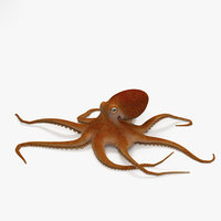 3D common octopus