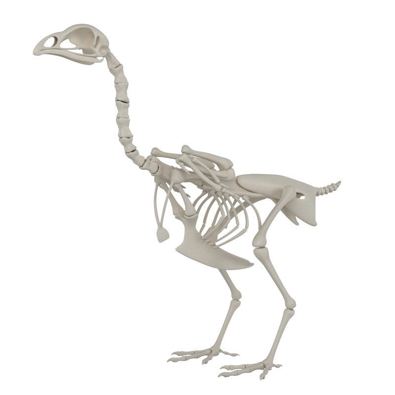 3D hen skeleton