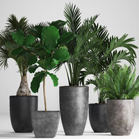 hyophorbe exotic plants 3D model