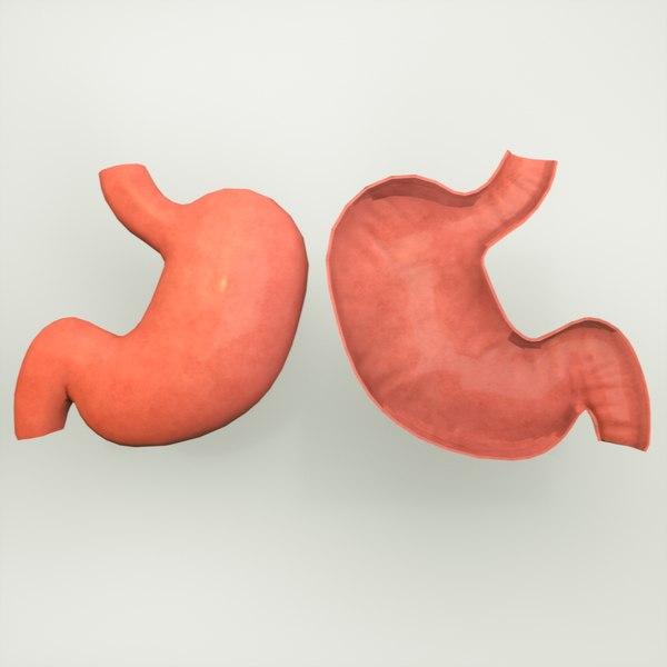 stomach human anatomy 3D model