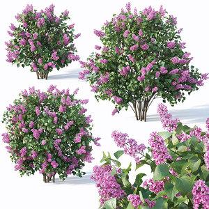 3D model lilac bushes