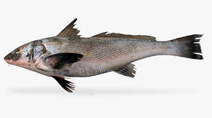 panama kingfish 3D model