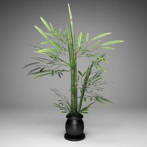 plant bamboo tree 3D model