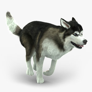 3d ma siberian husky fur animations