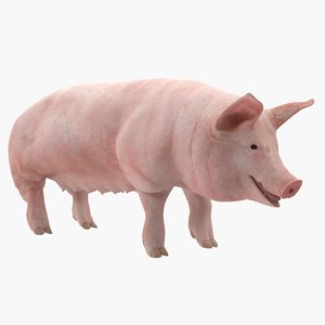 3D pig sow landrace rigged model