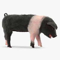 3D hampshire pig piglet standing model