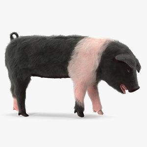 3D hampshire pig piglet standing model