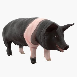 hampshire pig sow rigged 3D model