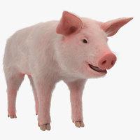 3D model pig piglet landrace fur