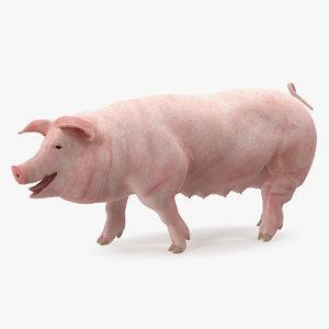 pig sow landrace walking 3D model