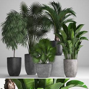 ornamental plants pots exotic 3D model
