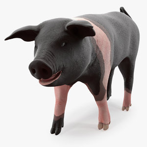 hampshire pig piglet walking 3D model