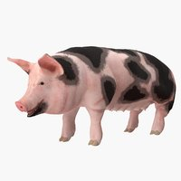 3D pig sow peitrain rigged model