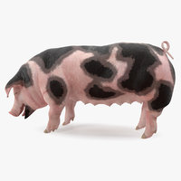 pig sow peitrain standing 3D model