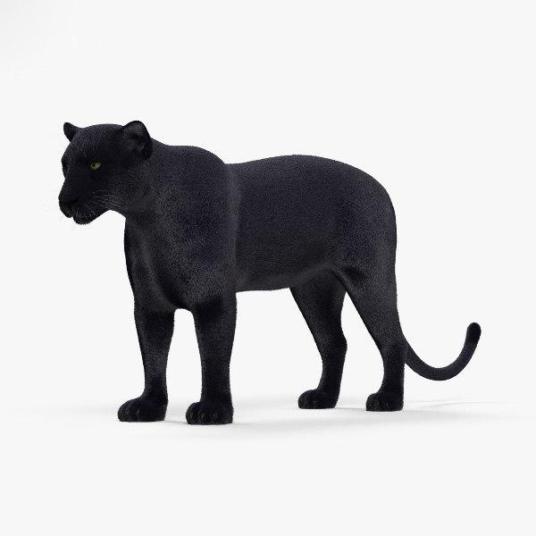 Schwarzer panther hd
