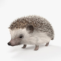 Hedgehog HD