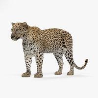 leopard 3D