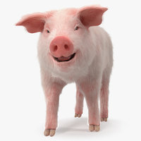 Pig Piglet Landrace with Fur Walking Pose 3D Model