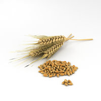 3D wheat model