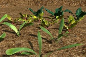 3D pack crops plant model