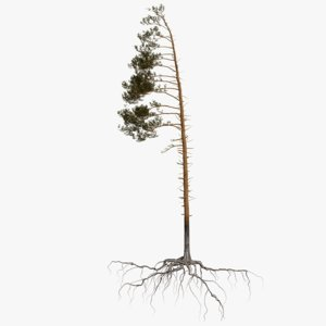 pine tree 4 model