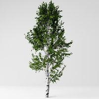 3D model white birch