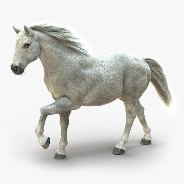 3D horse white fur animation model