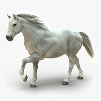 3D horse white fur animation model