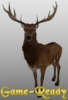 Photorealistic Deer Low Poly Game-Ready