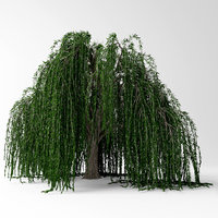 3D weeping willow