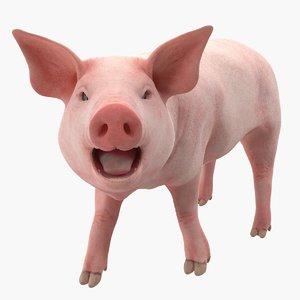 pig piglet landrace rigged 3D