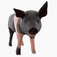 hampshire pig piglet rigged 3D