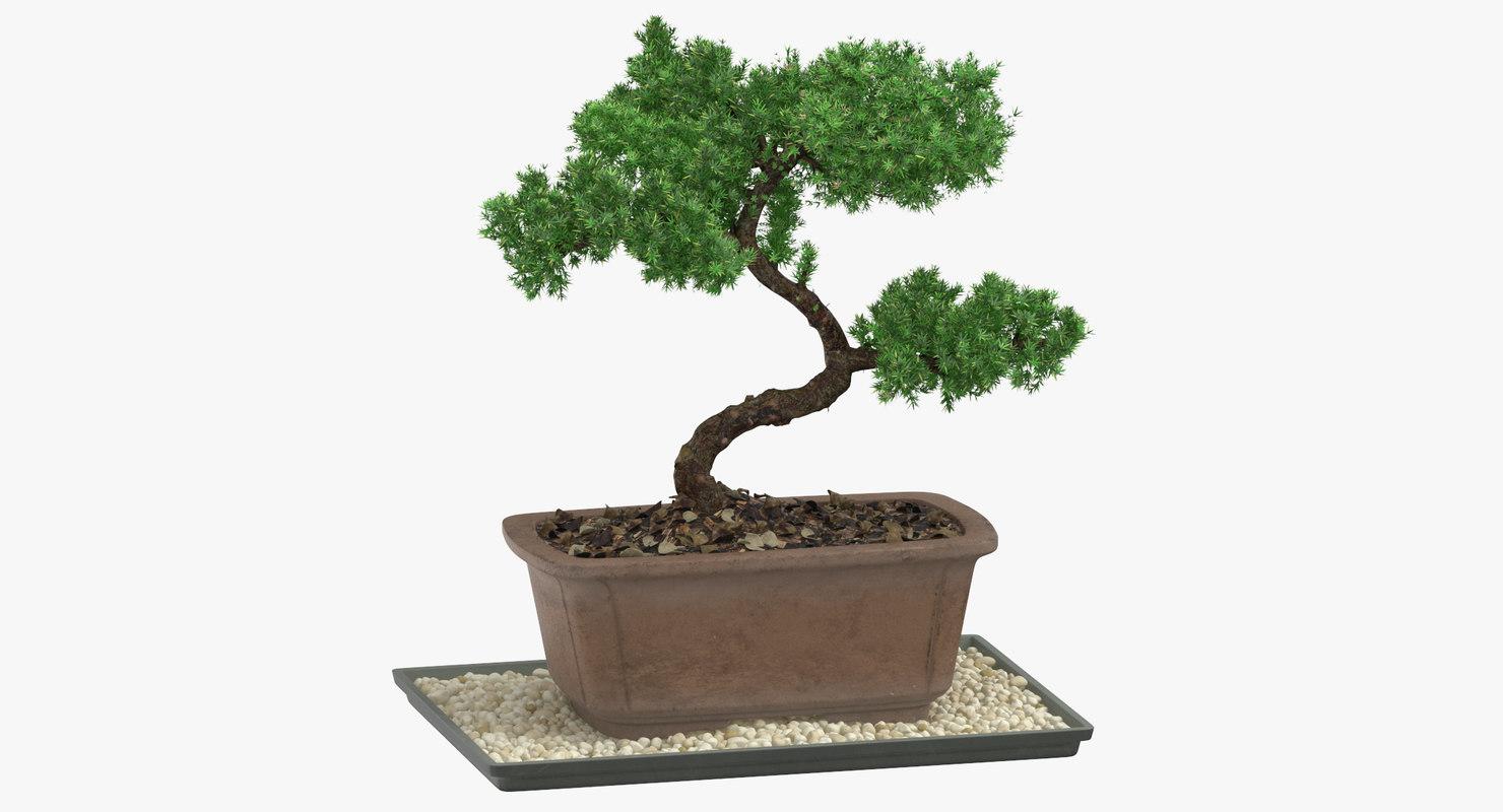 bonsai tree 03 3D