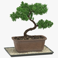 bonsai tree 03 3D