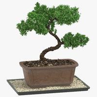 Bonsai Tree 03