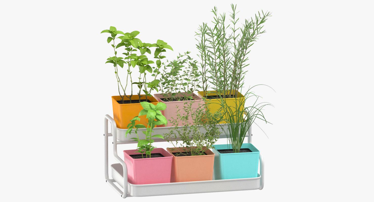 3D model indoor herb 03