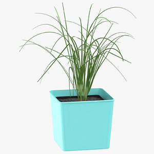 chives herb 3D model