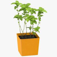 3D mint herb model