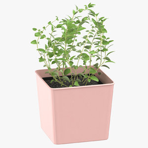 3D oregano herb