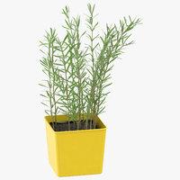 herb rosmary 3D model