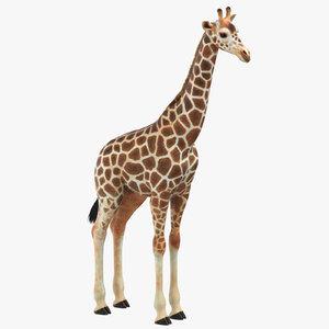 3D giraffe photorealistic